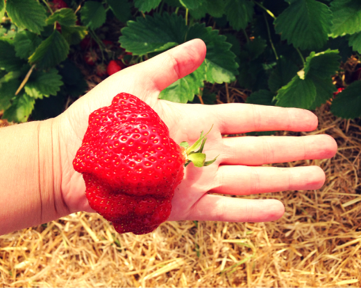 Erdbeermarmelade Rezept_3