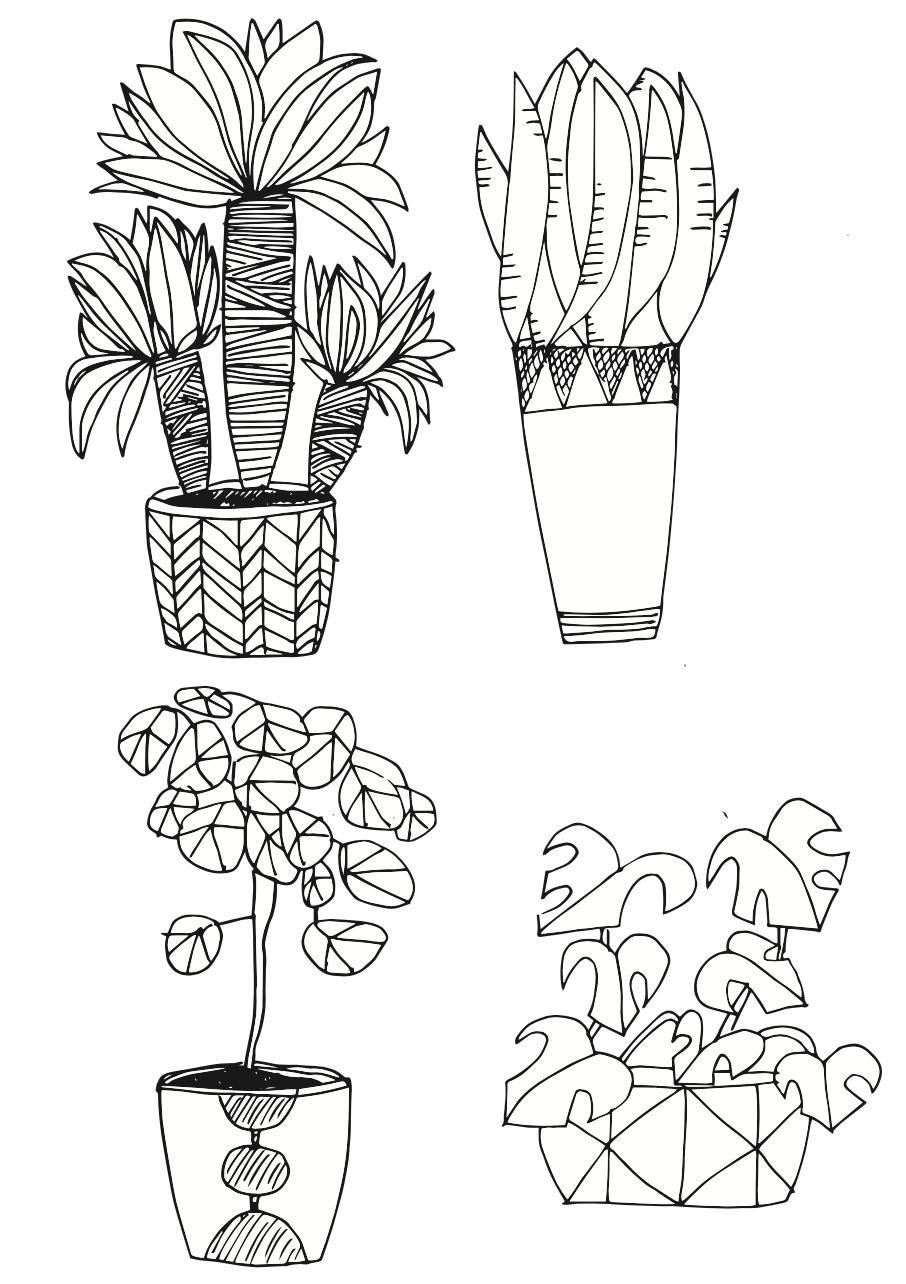 Pflanzen Zeichnen Für Anfänger Ganz Leicht Gemacht