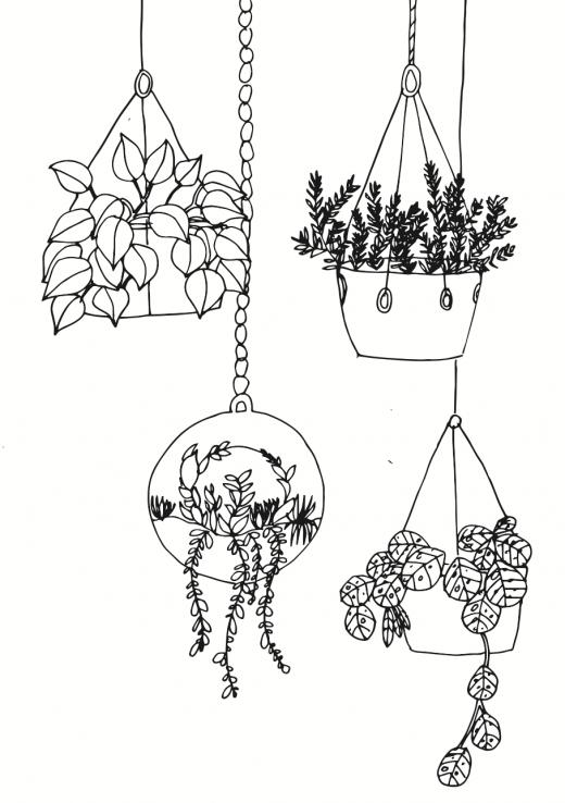 Pflanzen zeichnen - rankende Hängepflanzen