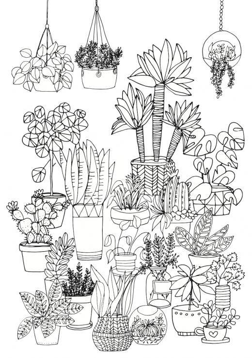 Pflanzen zeichnen - Ausmalbild zum herunterladen